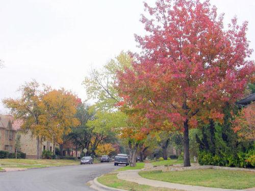 Autumn_010