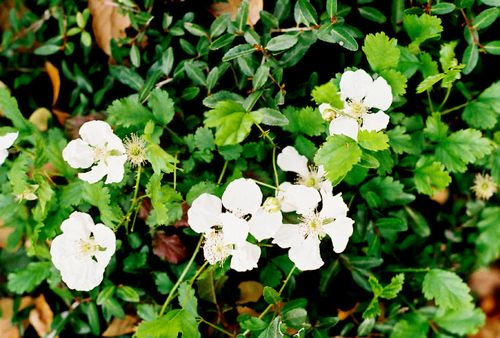 Spring 2009_004