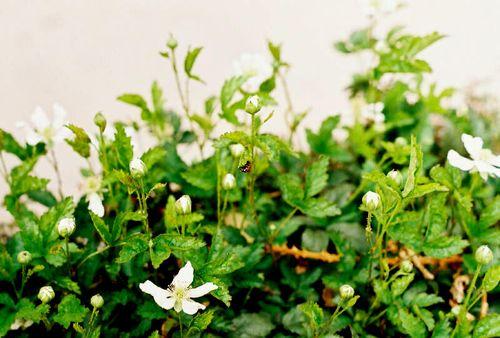 Spring 2009_003