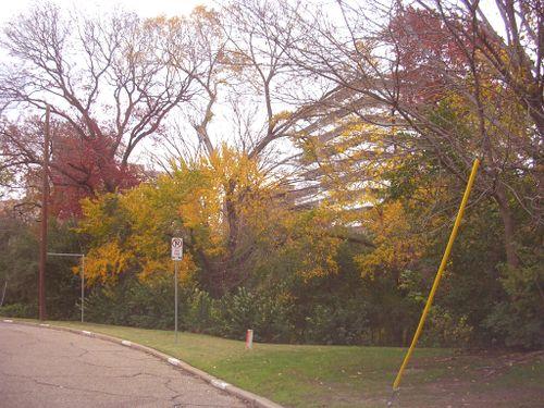 Autumn 2009_009
