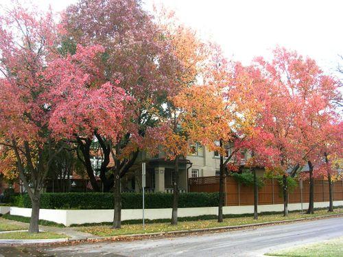 Autumn 2009_010