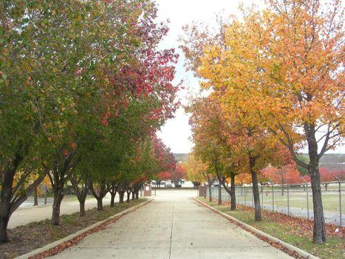 Autumn 2009_008