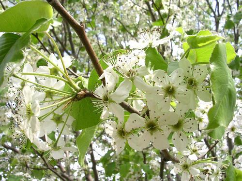 Spring_005