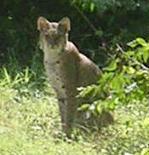 Kittykat_2